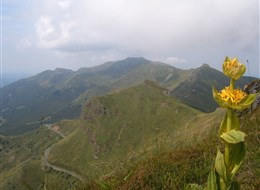Francie - Auvergne - hřebeny tvořené vrcholy sopek a žluté hořce