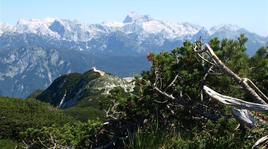 Putování, relaxace a turistika  v Julských Alpách 2021  Slovinsko - Julské Alpy - Triglav přes kosodřevinu