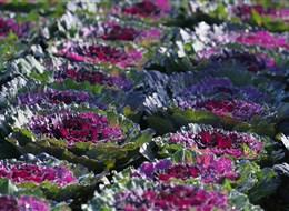 Francie - zámky na Loiře - Villandry, i zelenina může být krásná