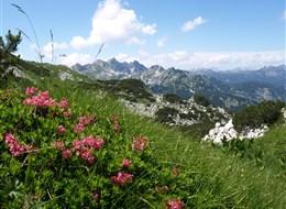 Slovinsko, hory, moře a jeskyně na jaře 2022 Slovinsko  Slovinsko - Julské Alpy - pod Voglem