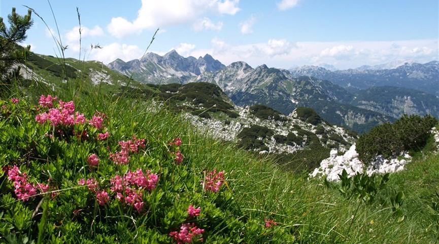 Slovinsko, hory, moře a jeskyně podzim 2021   Slovinsko - Julské Alpy - pod Voglem