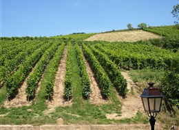 Francie - Alsasko - Riquewihr, vinice se na všech stranách dotýkají města