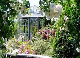 Zahradnický veletrh v Tullnu, Krems, zámek Rosenburg a Kittenberské zahrady 2020 Dolní Rakousko Rakousko - Kittenberské zahrady - Růžová zahrada