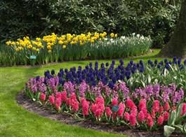 Holandsko, Velikonoce v zemi tulipánů s ubytováním v Rotterdamu 2021  Holandsko  - Keukenhof