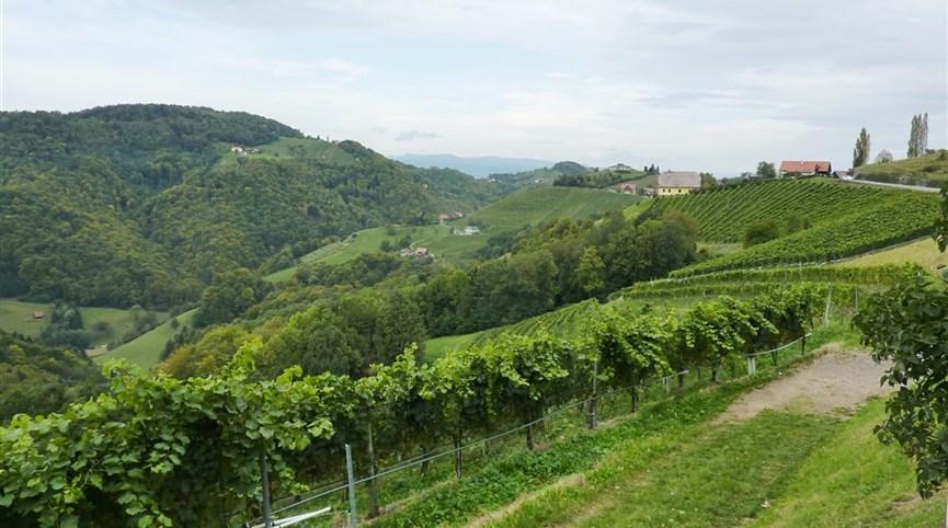 Štýrsko, zážitkový týden mnoha nej 2021  Rakousko - Štýrsko - Kitzeck, mikroklima je tu tak teplé, že zde dozávají fíky