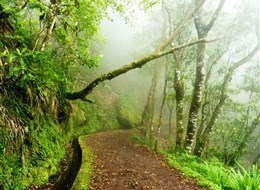 Madeira - Levada Velha a vavřínový les.