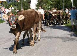 Údolí Pitztal a Kaunertal s kartou 2021 Alpy Rakousko - shánění stád- holky přidejte ať na vás nemusím čekat