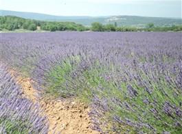Provence a krásy Azurového pobřeží letecky 2020  Francie - Provence - kraj voní levandulí