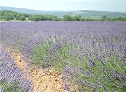 Provence a krásy Azurového pobřeží letecky 2020 Azurové pobřeží Francie - Provence - kraj voní levandulí