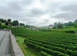 Francie - Akvitánie - v okolí St.Emilion převládá odrůda Merlot, doplněná Cabernetem Sauvignon, Malbecem a Cabernetem Franc   foto Pavel Michal