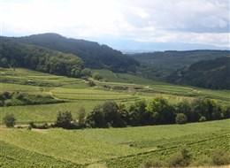 Francie - Alsasko - kraj vinicemi přebohatý