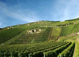 Německo - Mosela - nejkvalitnější vína této oblasti nesou označení QmP
