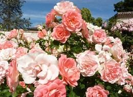 Berlín, biosferická rezervace UNESCO a slavnost růží v Rosariu 2021 Česká republika Německo - Europa-Rosárium, ráj pro milovníka růží