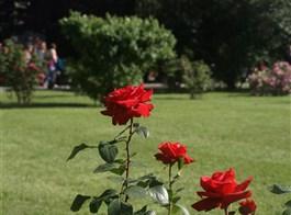 Vídeň po stopách Habsburků, Schönbrunn i Laxenburg a Baden, historické zahrady 2021  Baden - Růžová zahrada, na ploše více než 90.000 m² se nachází cca 600 různých druhů růží