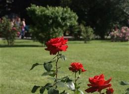 Slavnost růží v Badenu a Schloss Hof 2020 Bavorsko Baden - Růžová zahrada, na ploše více než 90.000 m² se nachází cca 600 různých druhů růží