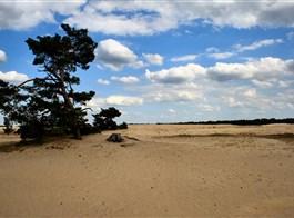 Přírodní parky a ostrovy severu Nizozemska a Gogh 2021  Holandsko - NP De Hoge Veluwe (Wiki free)