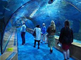 Valencie, perla Costa Azahar, přírodní parky a svátek Fallas 2020  Španělsko - Valencie - L'Oceanogràfic má plochu 110.000 m2 a kapacitu 42 milionů litrů vody