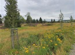 Za památkami UNESCO v Krušnohoří  a zážitková muzea 2020 Sasko Ceská republika - sejpy (hromady přerýžovaného materiálu) v okolí Božiho Daru
