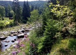 Turistika na Krkonošsko-jizerském  pomezí 2020 Beskydy a Slezsko Česká republika, Jizerské hory, řeka Jizera, Kořenov (K. Kaucká)