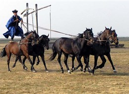 Maďarsko - NP Hortobágy - Kochova pětka, ukázka vrcholného jezdeckého umění maďarských pastevců - čikošů