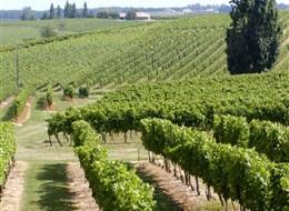 Francie - Akvitánie - vinice v okolí Cognac