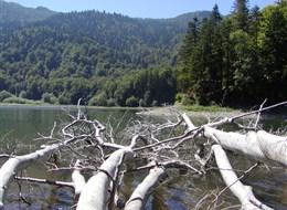 Černá Hora, NP Biogradská gora, ledovcové jezero