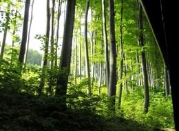 Maďarsko - NP Bukové hory - krásné bukové lesy dělají pohoří čest a jméno